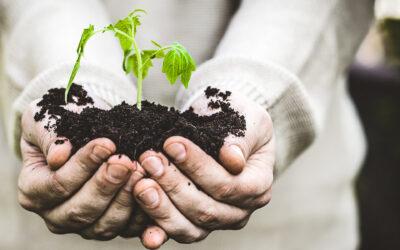 Valorizarea deseurilor agroindustriale